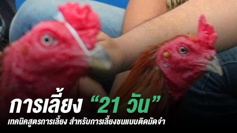 ผลการค้นหารูปภาพสำหรับ แชมพูมาล้างตัวไก่
