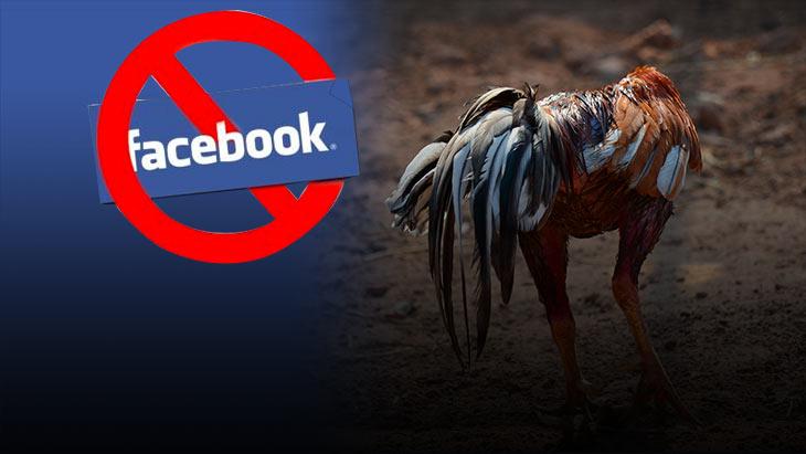 กฏใหม่เฟสบุ๊คห้ามโพสต์อะไรบ้าง ปัญหาใหญ่ของคนไก่ชนที่ต้องรู้