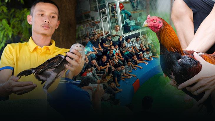 ความสำคัญของสนามชนไก่ กับการเพิ่มมูลค่าไก่ชน