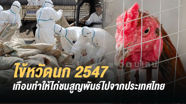 ถ้าไก่ชนสูญพันธ์ ไปจากประเทศไทย / โดยไก่ชนออนไลน์