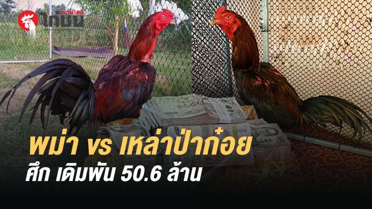 ศึกแห่งสองสายพันธ์ไก่ชน พม่า vs เหล่าป่าก๋อย วงเงินเดิมพัน 50.6 ล้านบาท