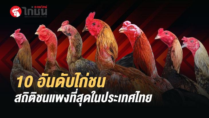 10 อันดับไก่ชน สถิติชนแพงที่สุดในประเทศไทย : โดยไก่ชนออนไลน์