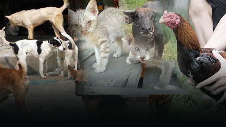หมา-แมว นำร่องลดภาระภาครัฐ  ก่อนบังคับใช้กับสัตว์เลี้ยงทุกประเภท รายได้เข้าท้องถิ่น