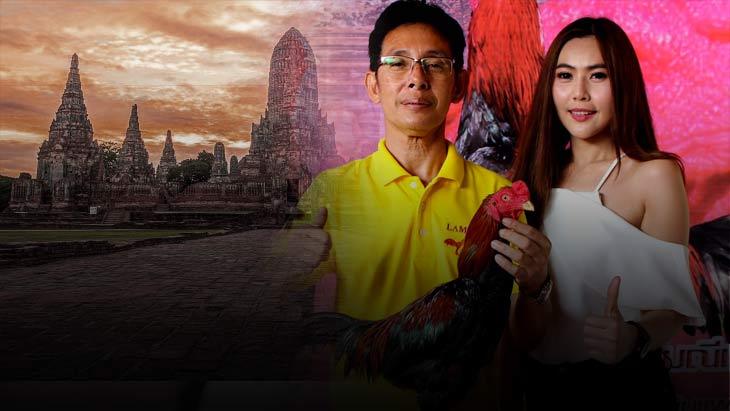 มหกรรมไก่ชนไทย มรดกไทยมรดกโลก งานใหญ่ไก่ชนส่งท้ายปี 60