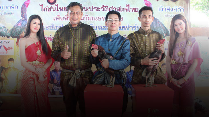 ไก่ชนเมืองกรุงเก่าตามลอยออเจ้า จัดงานบุพเพสันนิวาส สืบสานวัฒนธรรมไทย ไก่ชนไทยหนึ่งในประวัติศาสตร์ไทย