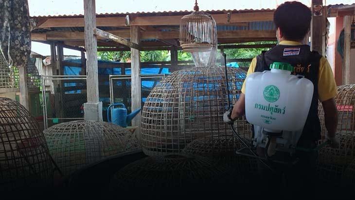 ปศุสัตว์สุโขทัยลงพื้นที่ทำความสะอาดและทำลายเชื้อโรคไข้หวัดนกในพื้นที่เสี่ยง
