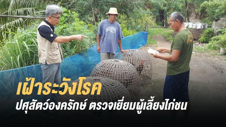 สำนักงานปศุสัตว์อำเภอองครักษ์ ตรวจเยี่ยมเกษตรกรผู้เลี้ยงไก่ชน